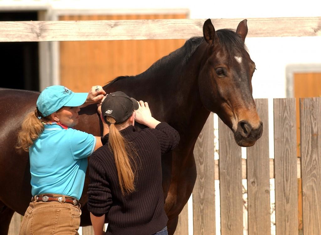 Whole Horse & Equestrian Institute