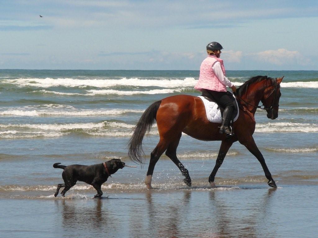 Horsewomen - on the beach