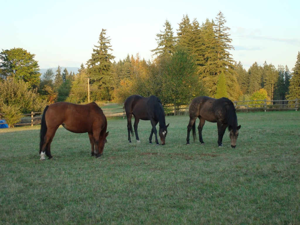 Horse freinds, grazing  together