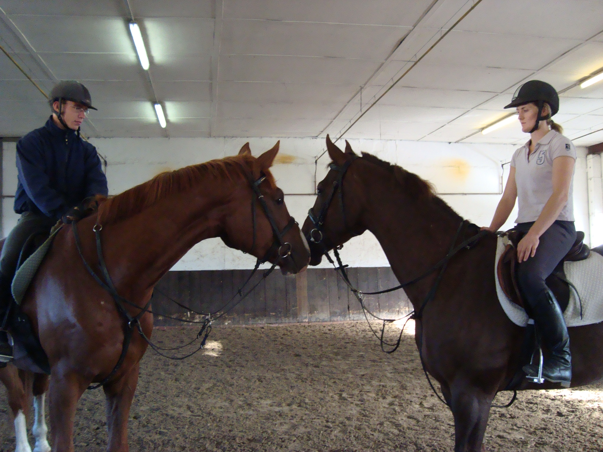 Equine physical therapy -  Arizona Young Horses Greeting During Training