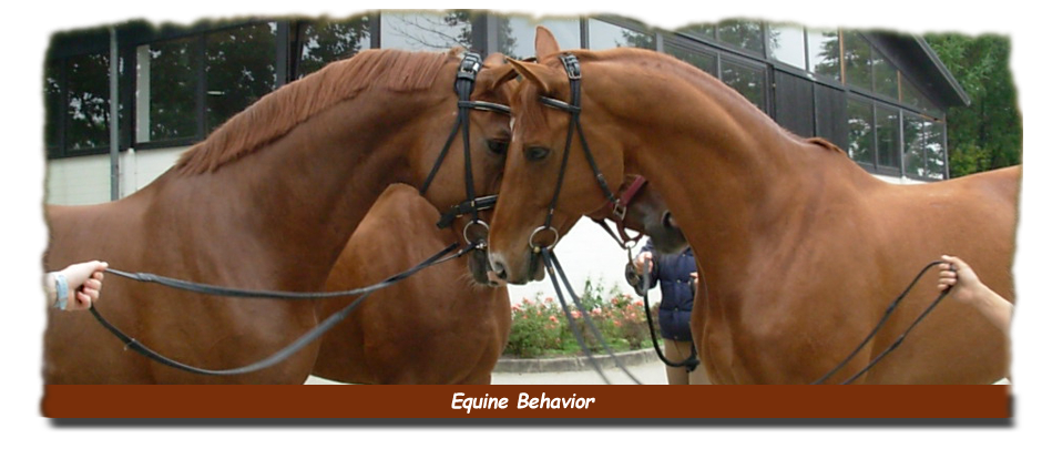 Equine Behavior Assessment & Temperament Typing