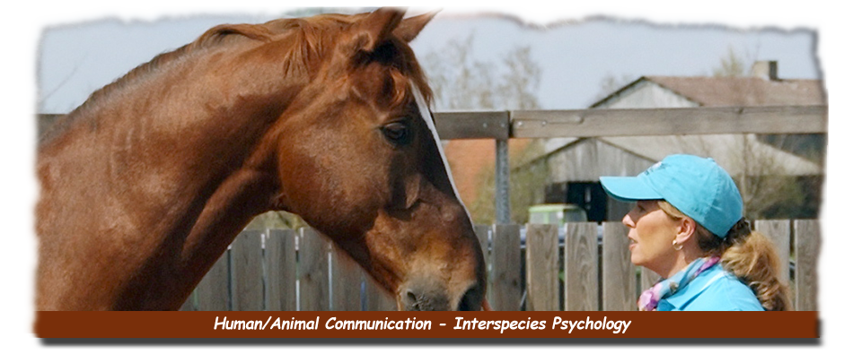 Human Animal Communications