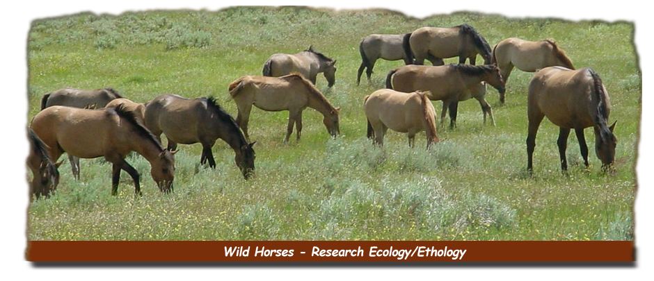 Wild Horses & Research